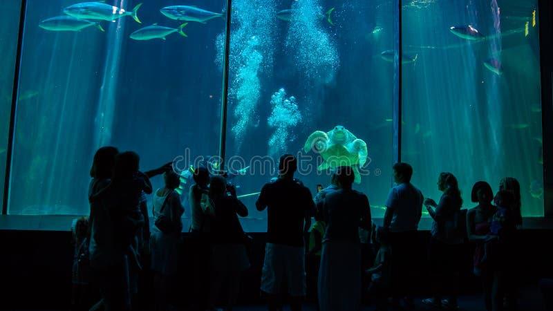 Kapsztad akwarium fotografia royalty free