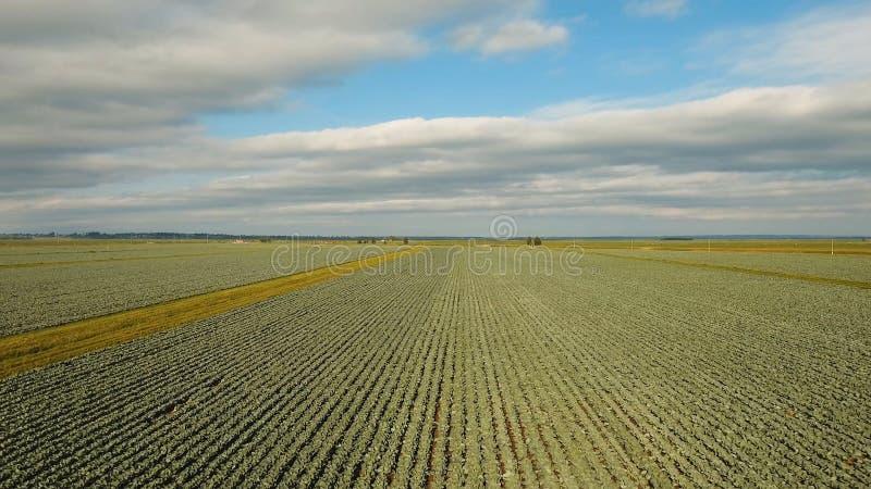 Kapuściany ziemi uprawnej pole zdjęcia royalty free