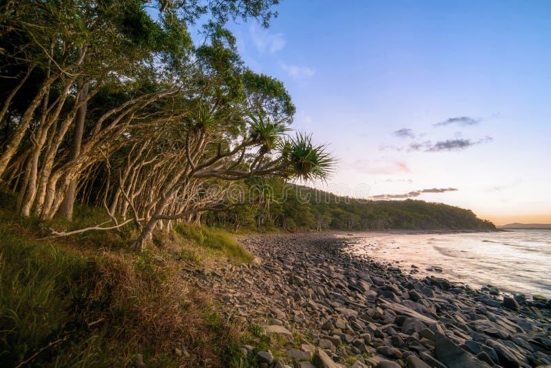 Kapuścianych palm drzewa rozciągają w kierunku Pacyficznego oceanu nad kamienistą plażą przy Noosa, Queensland, Australia fotografia stock