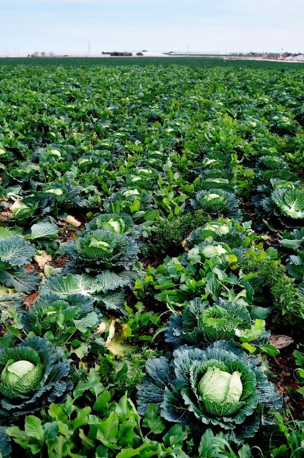 Download Kapuściana plantacja zdjęcie stock. Obraz złożonej z posiłki - 13333132