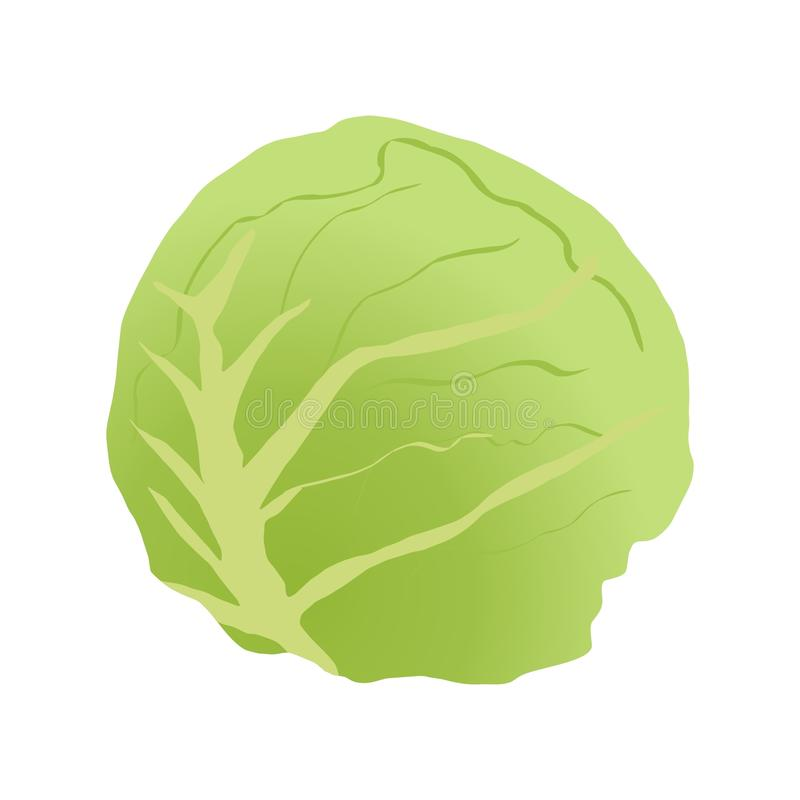 kapusty zieleń ilustracji