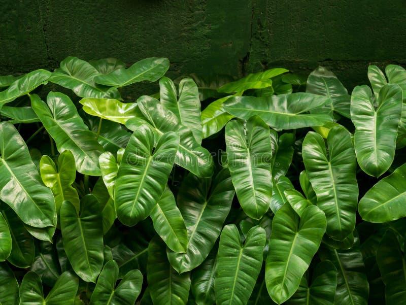 Karłowata ornamentacyjna roślina obraz stock