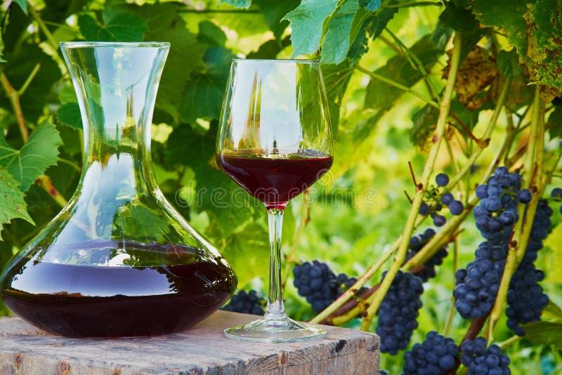 Karaff och exponeringsglas av vin arkivfoton