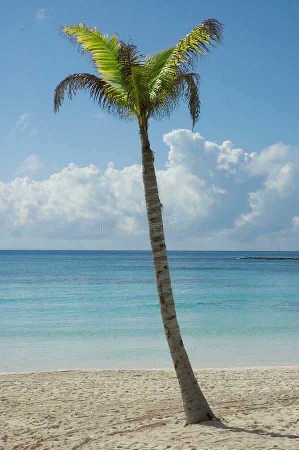 karaibów na plaży zdjęcia stock