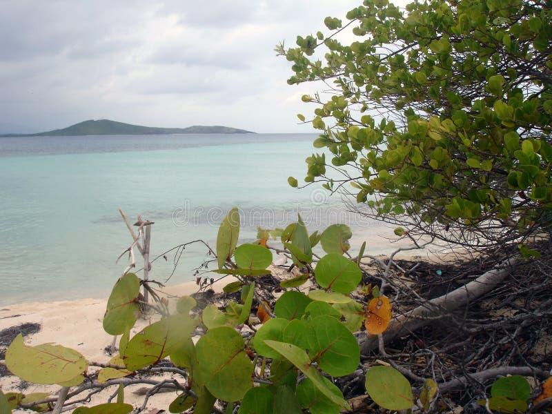 karaibów plażowy puerto rico widok fotografia royalty free