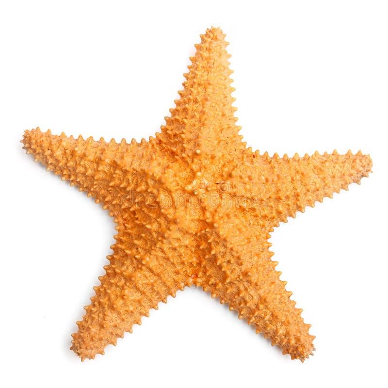 Karaibska rozgwiazda. zdjęcie royalty free