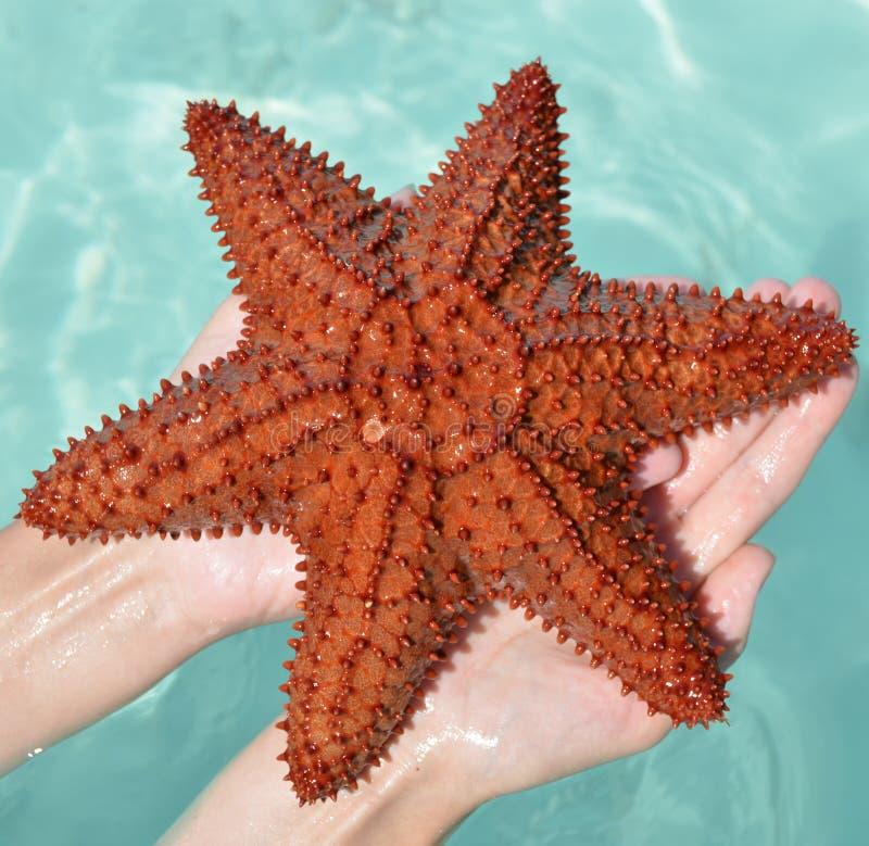 Karaibska rozgwiazda obraz stock