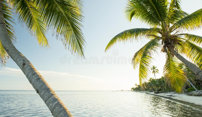 Karaiby plaża Belize fotografia stock