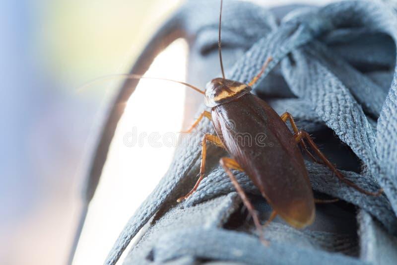 Karakan żywy na butach fotografia stock