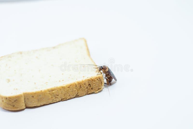 Karakan je chleb na odosobnionym bielu zdjęcie stock