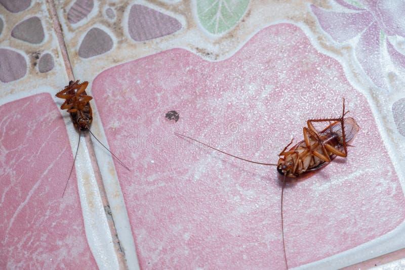 Karakan kostka do gry przez flit fotografia stock