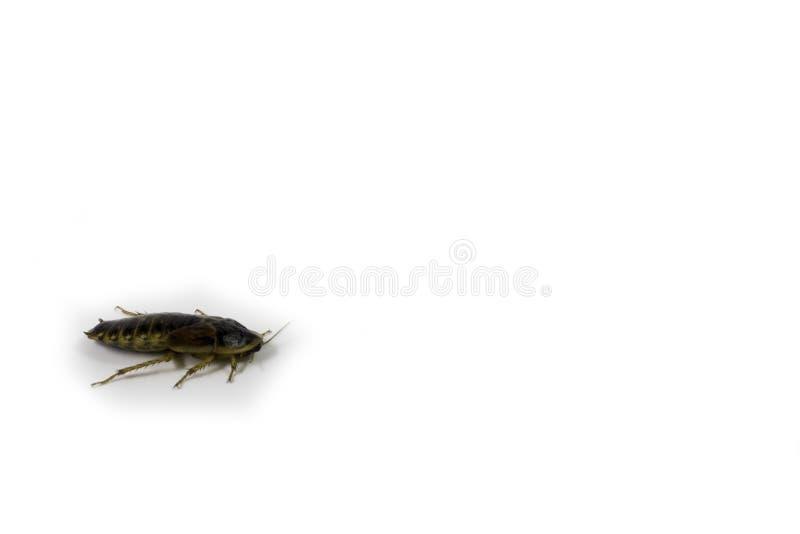 Karakan z białym tłem fotografia stock