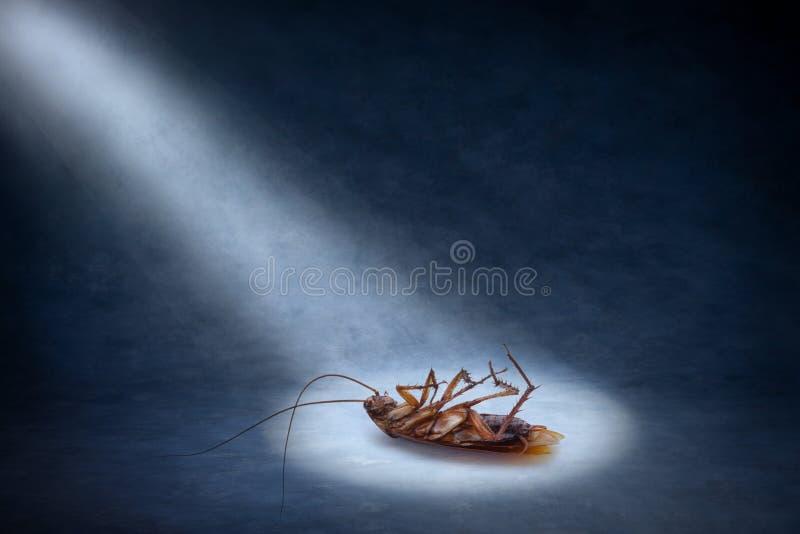 karakanu nieżywa insekta zaraza zdjęcia stock