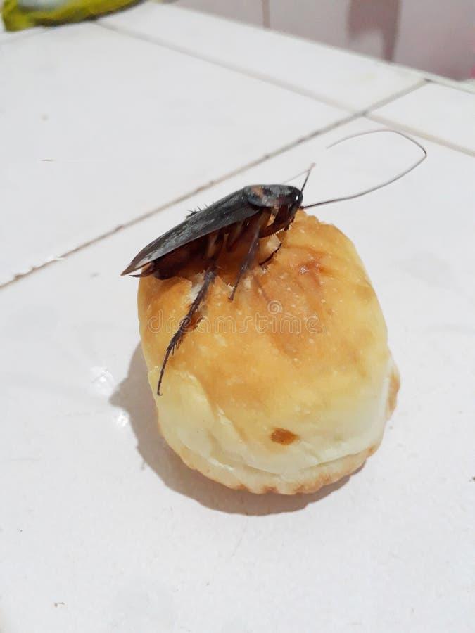 Karakany są na chlebie Umieszczający na biały tle zdjęcia royalty free