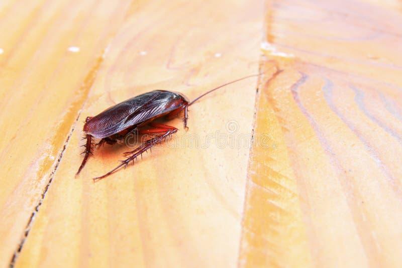 Karakany umiera zakończenie na drewnianym stole w kuchni obraz stock