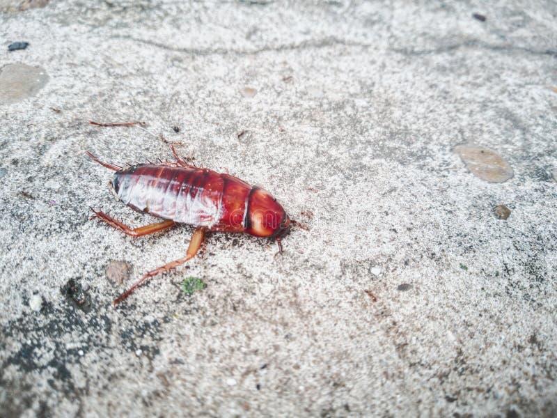 Karakany umierają na cementowej podłoga po uderzającego flitem obraz stock