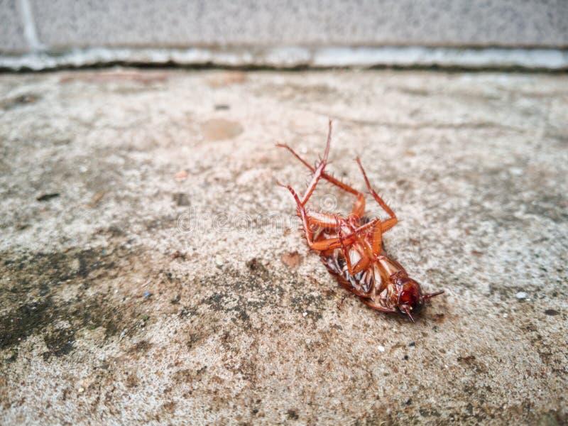 Karakany umierają na cementowej podłoga po uderzającego flitem obrazy stock