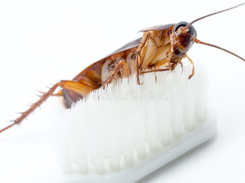 Karakany wtykają na poradzie biały toothbrush zdjęcie royalty free
