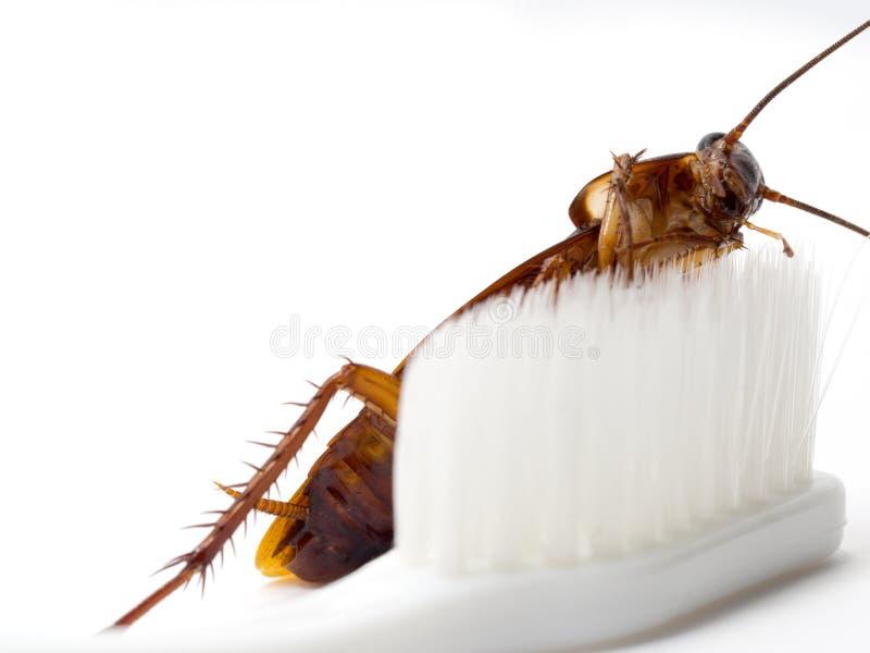 Karakany wtykają na poradzie biały toothbrush Karakany są przewoźnikami choroba zdjęcia royalty free
