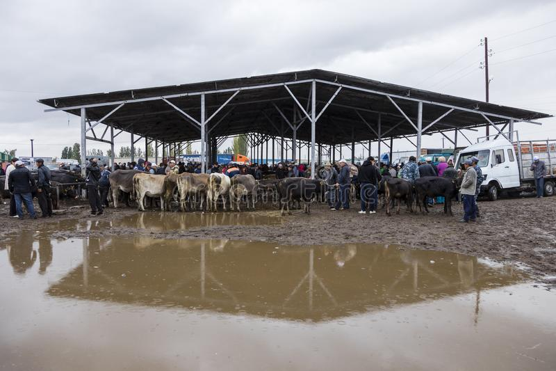 Karakol, Kyrgystan, il 13 agosto 2018: Mercato animale settimanale di domenica in Karakol fotografia stock libera da diritti