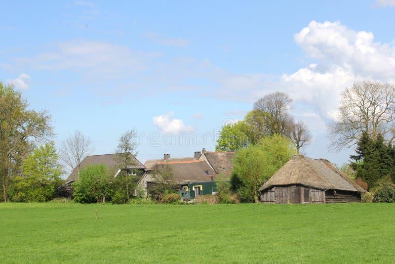 Karakteristisk holländsk lantgård och sheepfold, Eempolder arkivbilder