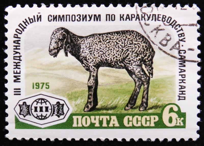 Karakul Lamb and devoted to 3rd International Symposium on karakul production, Samarkand, circa 1975. MOSCOW, RUSSIA - APRIL 2, 2017: A post stamp printed in stock image