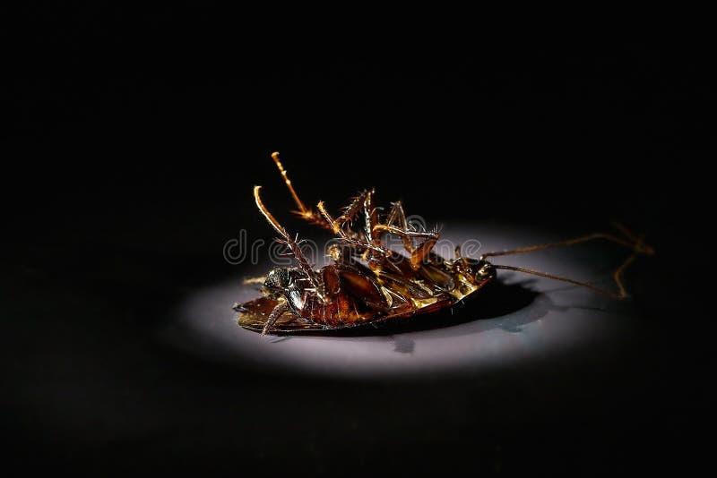 karaluch nie żyje zdjęcia stock