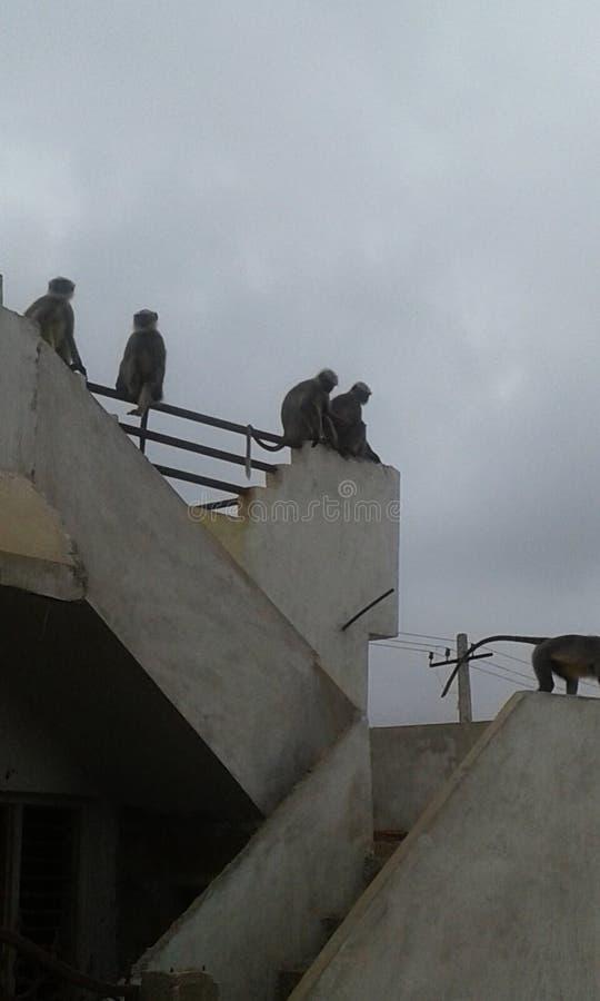 Karanataka gadag stock foto
