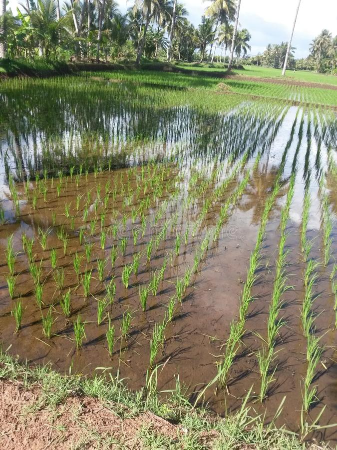 Karang Tirta field royalty free stock photos