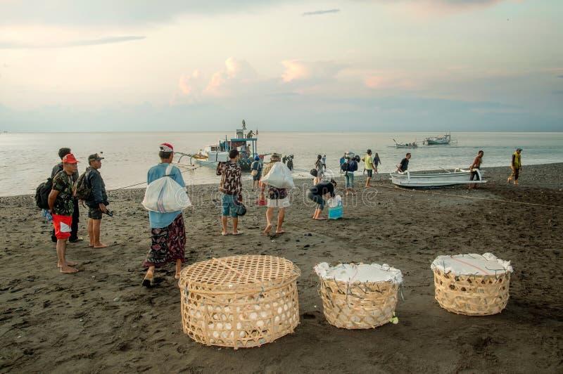 Karangasem, Bali, Indonesia. Local folk on black beach volcanic sand carries livestock boarding by ferry to opposite Lombok Island. Karangasem was in danger zone