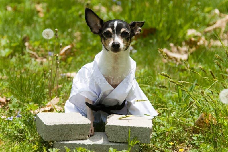 Karate canino fotografía de archivo