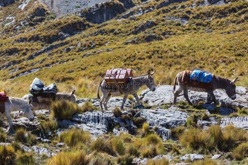 Karawana w Cordillera zdjęcie stock