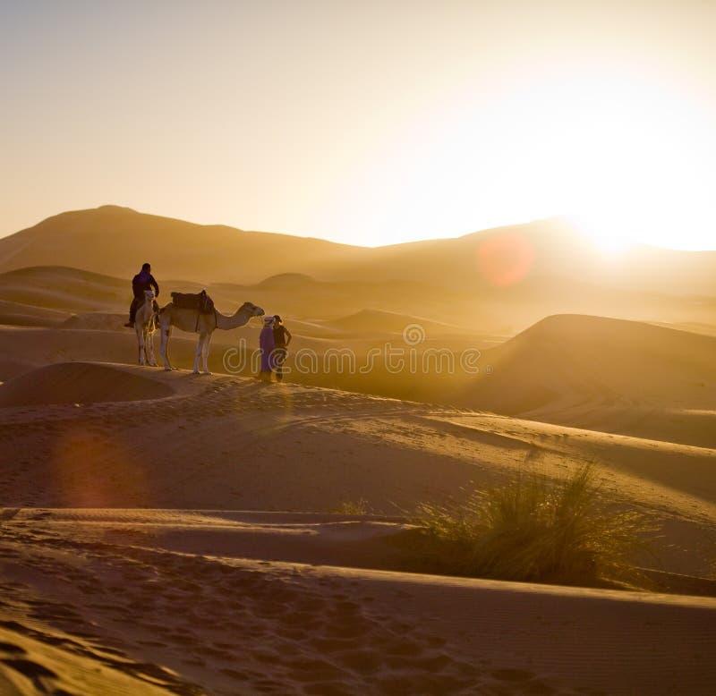 karawany wielbłądzia pustynia Sahara fotografia royalty free