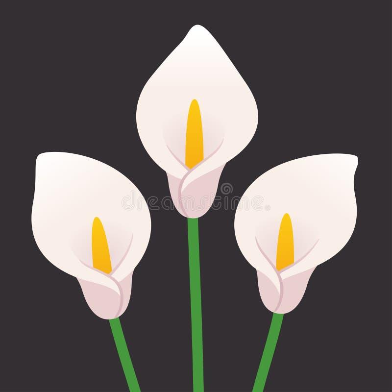 karciany kalia projekt kwitnie lelui inny s szablonu cechy ogólnej valentine ilustracji
