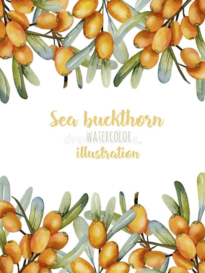 Karciany szablon z akwareli dennego buckthorn gałąź, ramy rabatowy tło royalty ilustracja