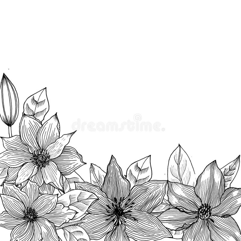 Karciany witth clematis czarny white grafit royalty ilustracja