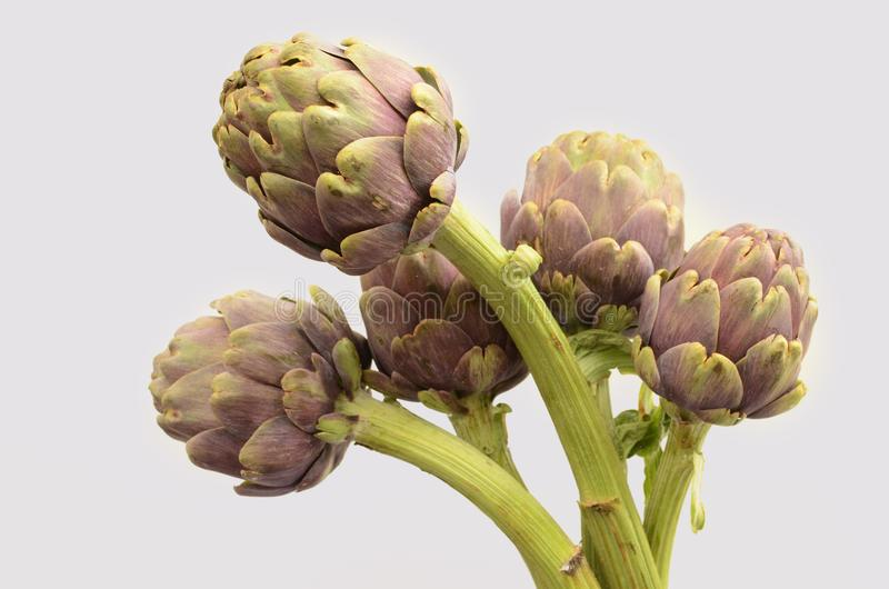 Karczoch roślina dla tła obraz stock