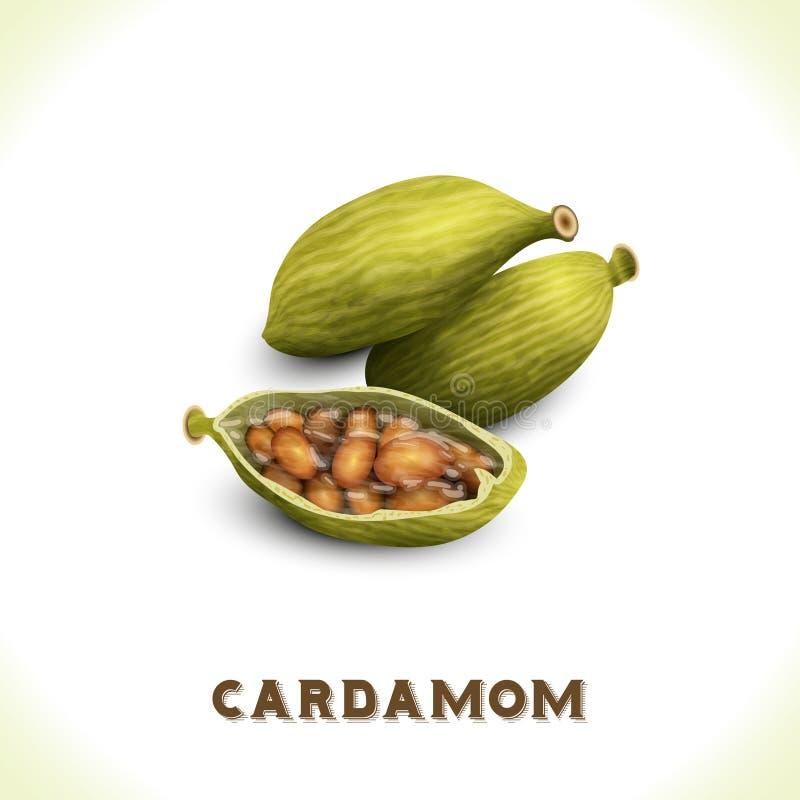 Kardamom lokalisiert auf Weiß lizenzfreie abbildung