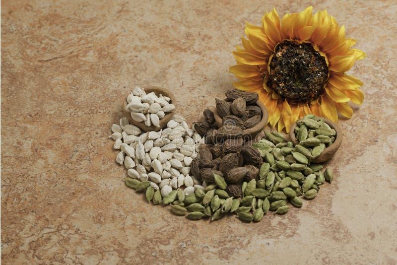 Kardamompflanze-Startwerte für Zufallsgenerator stockbild