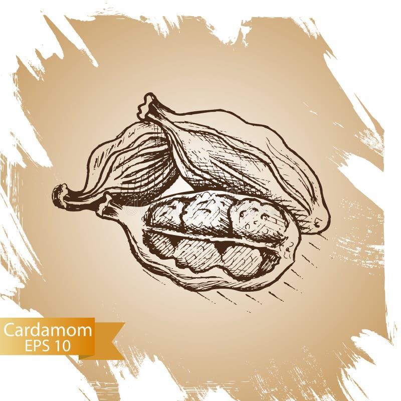 Kardamon ilustracja Kulinarna podprawa Kulinarna pikantność robić w ręka rysującym nakreślenie stylu royalty ilustracja