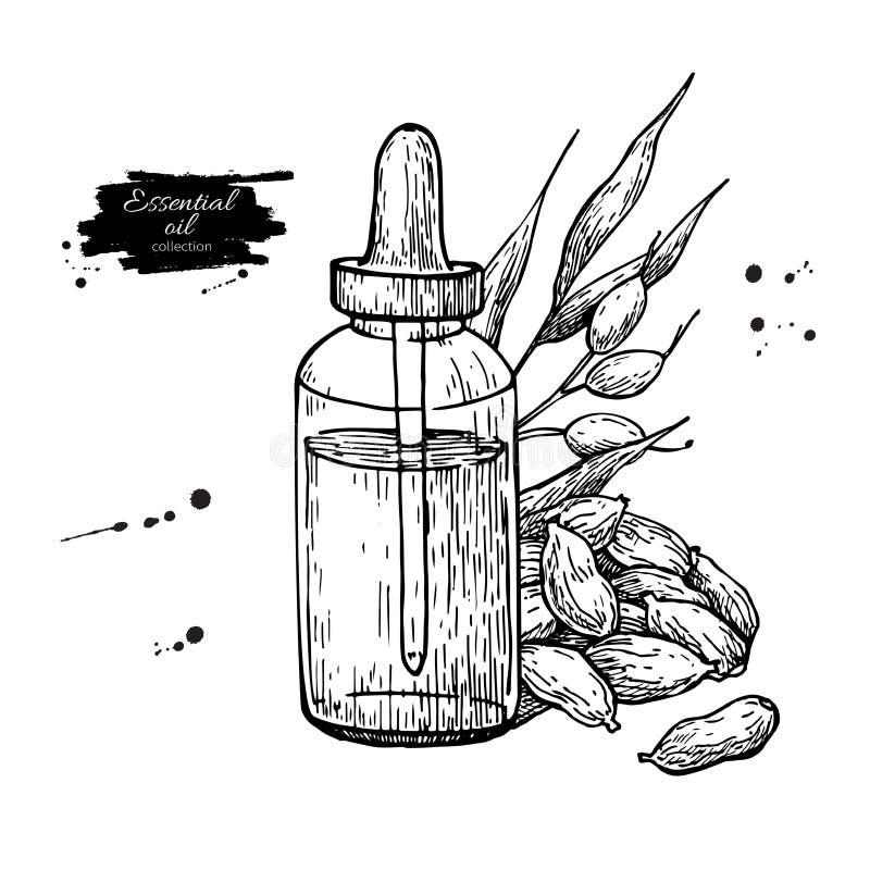 Kardamon istotna nafciana butelka i kardamonów ziarna wręczamy patroszoną wektorową ilustrację Odosobniony roślina rysunek dla Ar royalty ilustracja
