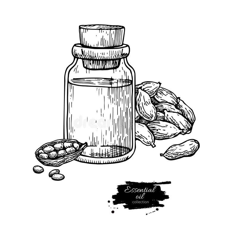 Kardamon istotna nafciana butelka i kardamonów ziarna wręczamy patroszoną wektorową ilustrację Odosobniony roślina rysunek dla Ar ilustracja wektor