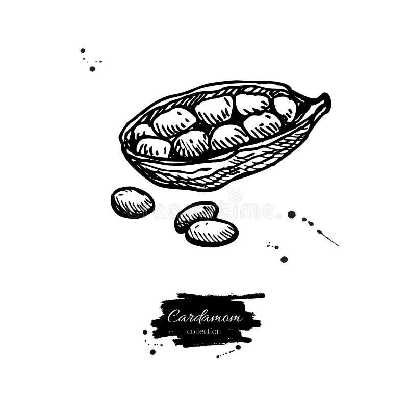 Kardamon nasieniodajna wektorowa ręka rysująca ilustracja pikantności obj ilustracji