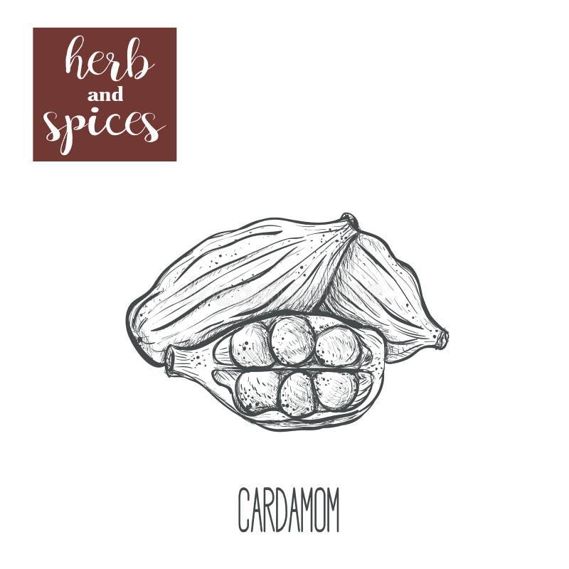 Kardamon ręki rysunek herb czosnków bay kardamonowi liści pieprzowe spice waniliowe rosemary soli royalty ilustracja