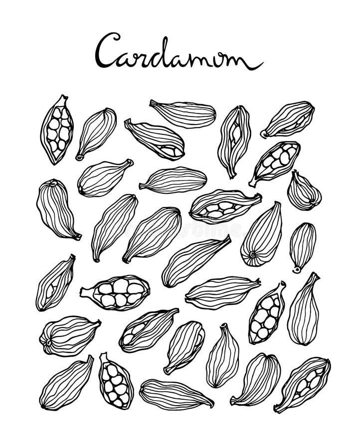 Kardamon sia ilustrację royalty ilustracja