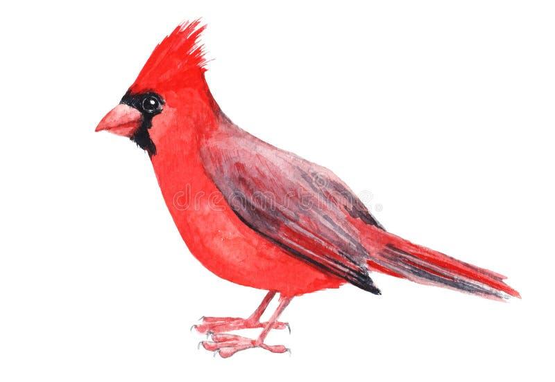 Kardinaal van de Watercolour de hand geschilderde vogel Helder illustratie geïsoleerd element op witte achtergrond Zwarte rode gr stock illustratie
