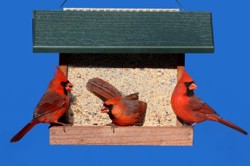 Kardinalen op een Voeder royalty-vrije stock afbeeldingen