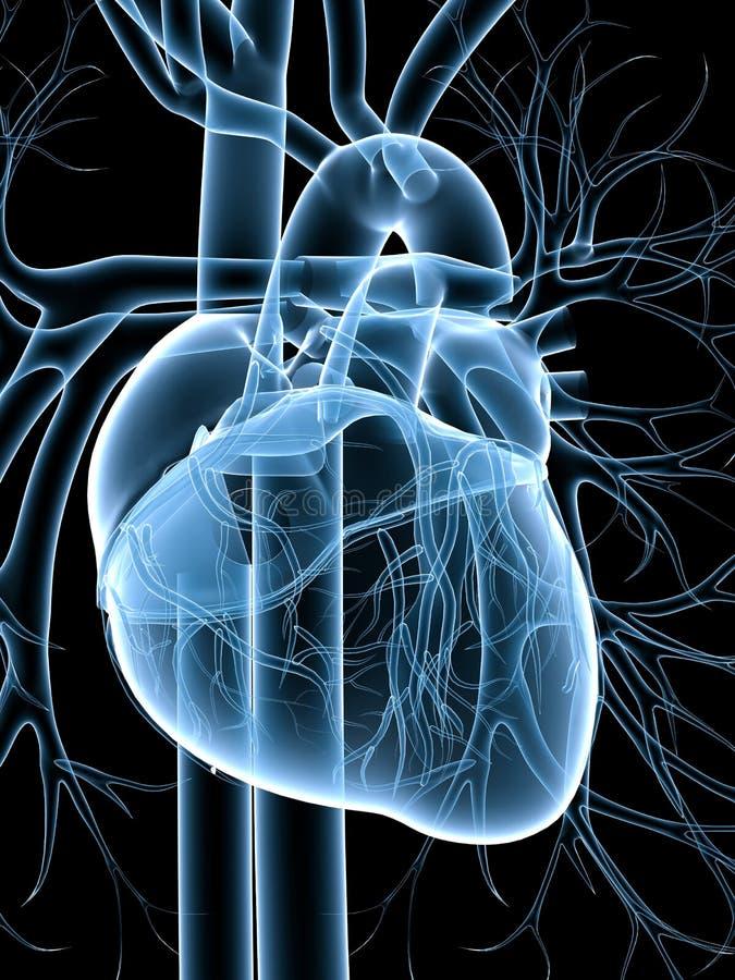 Kardiovaskuläres System stock abbildung