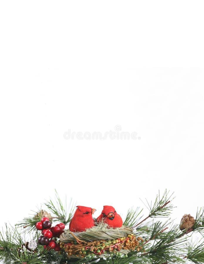 kardynał wiecznozielona stacjonarną zimy. obrazy royalty free
