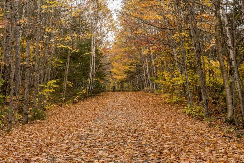 Kareciana droga Zakrywająca w spadków liściach obrazy royalty free